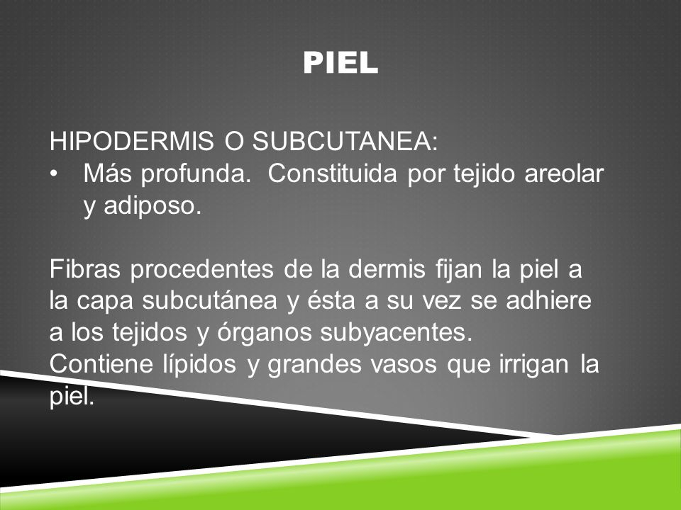 PIEL HIPODERMIS O SUBCUTANEA:
