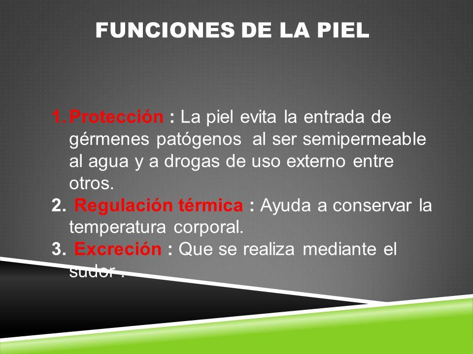 FUNCIONES DE LA PIEL Protección : La piel evita la entrada de gérmenes patógenos al ser semipermeable al agua y a drogas de uso externo entre otros.