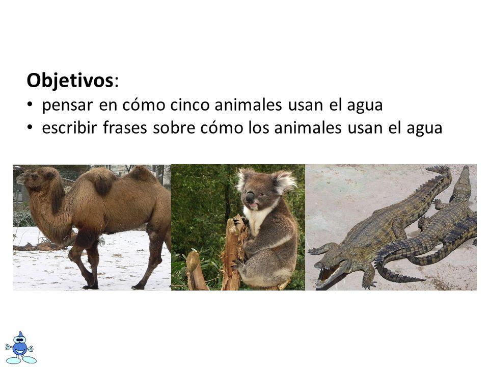 Objetivos: pensar en cómo cinco animales usan el agua