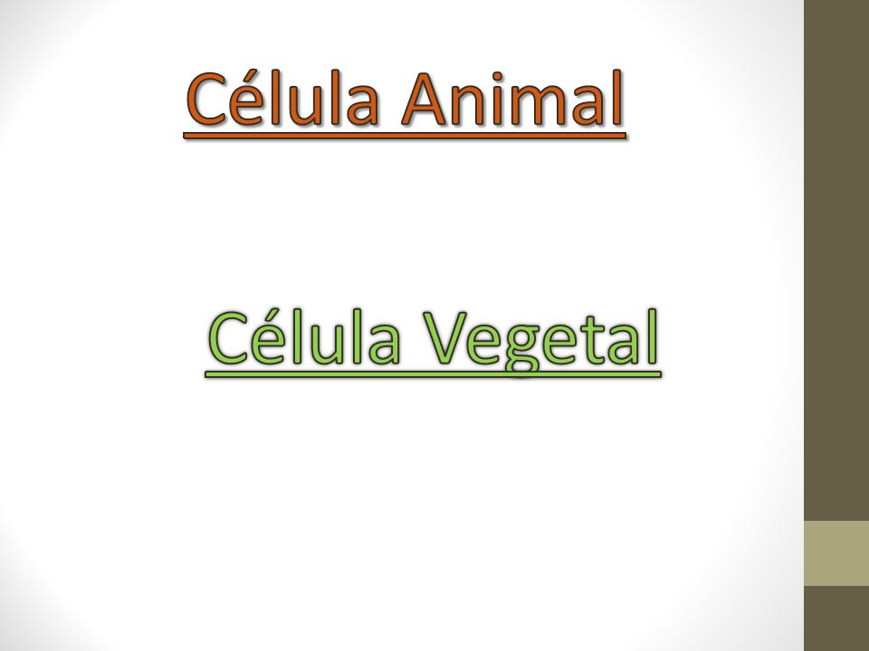 Célula Animal Célula Vegetal