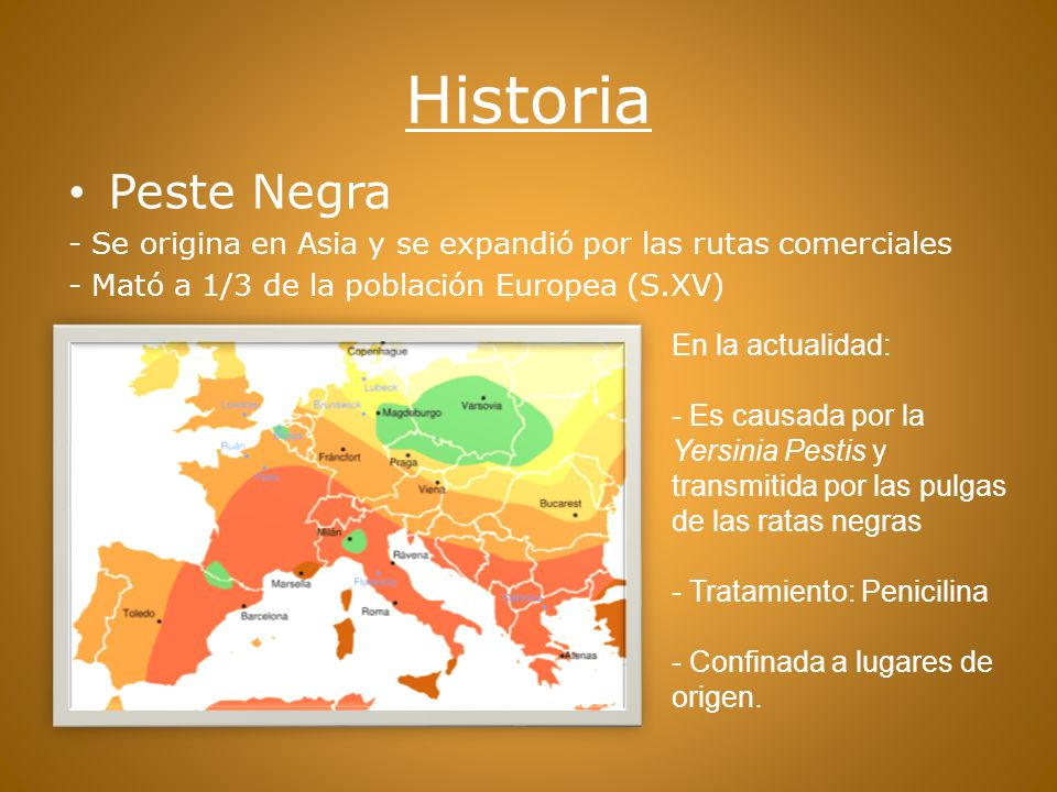 Historia Peste Negra. - Se origina en Asia y se expandió por las rutas comerciales. - Mató a 1/3 de la población Europea (S.XV)