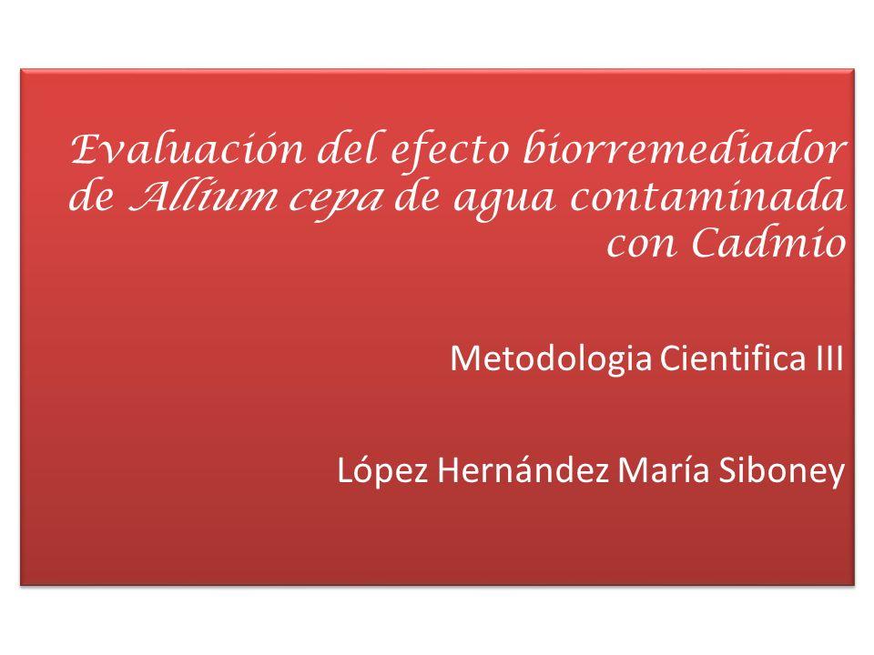 Evaluación del efecto biorremediador de Allium cepa de agua contaminada con Cadmio Metodologia Cientifica III López Hernández María Siboney
