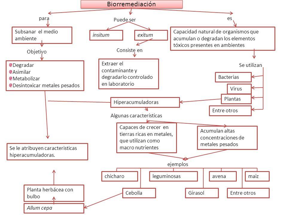 Biorremediación para Puede ser es Subsanar el medio ambiente