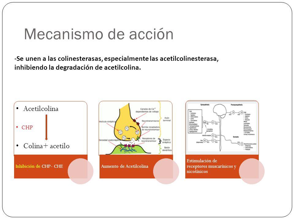 Mecanismo de acción Acetilcolina Colina+ acetilo