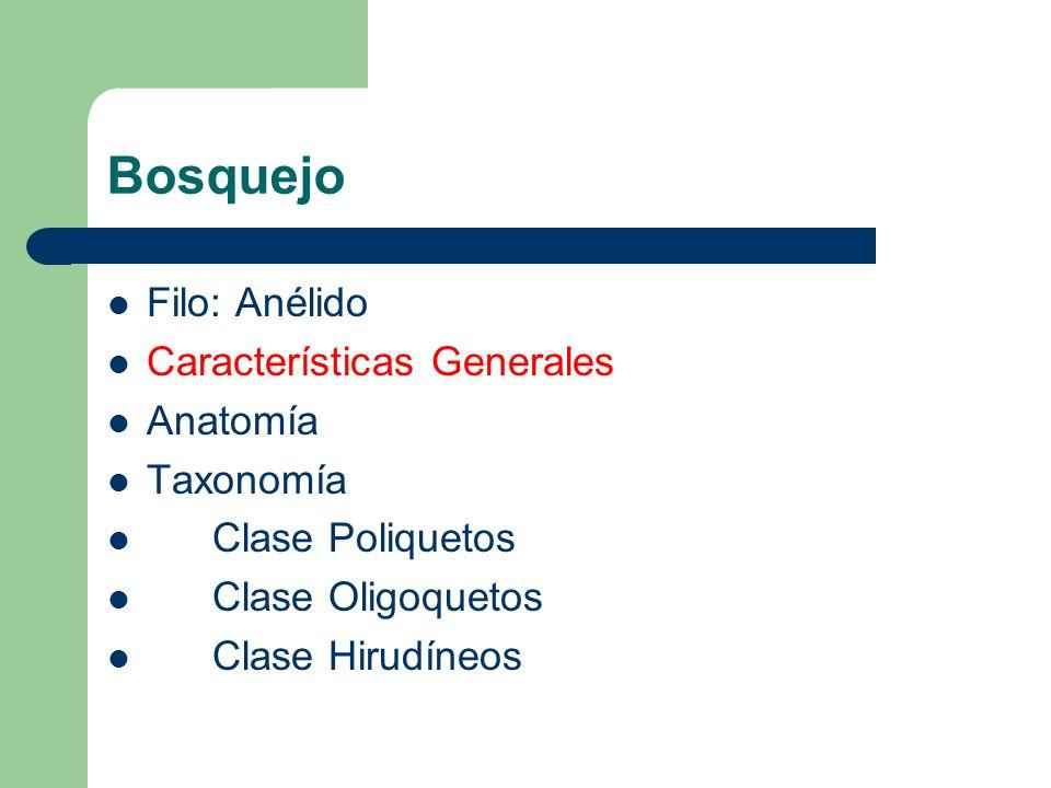 Bosquejo Filo: Anélido Características Generales Anatomía Taxonomía