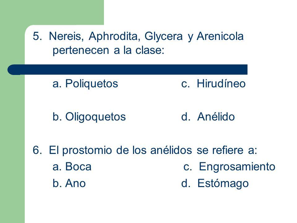 5. Nereis, Aphrodita, Glycera y Arenicola pertenecen a la clase: