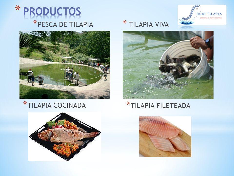 PRODUCTOS PESCA DE TILAPIA TILAPIA VIVA TILAPIA COCINADA