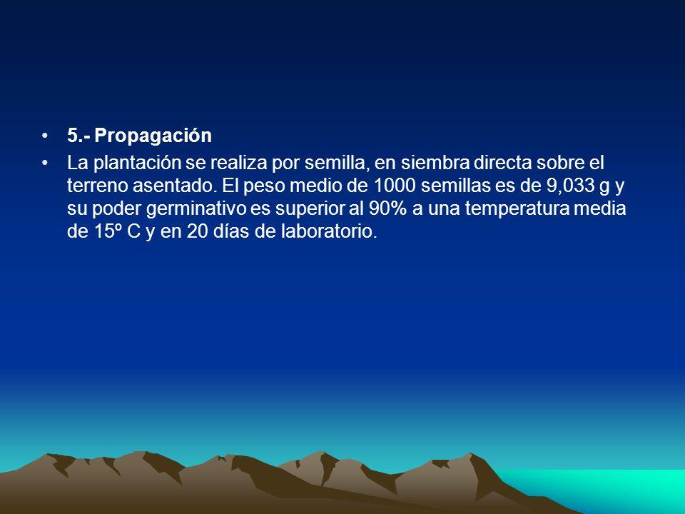 5.- Propagación