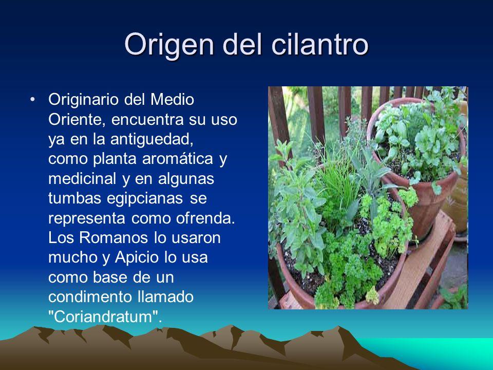 Origen del cilantro