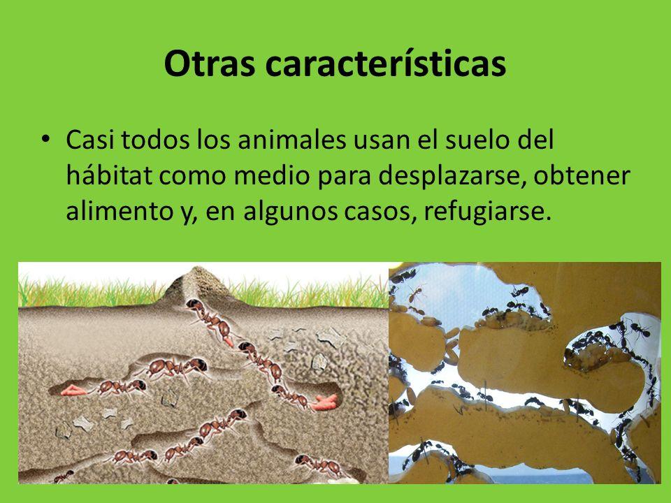 Ciencias naturales 2 b sicos ppt video online descargar for Como abrillantar el suelo