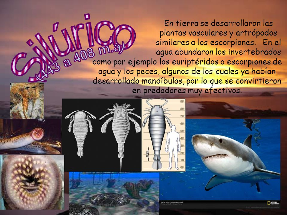 En tierra se desarrollaron las plantas vasculares y artrópodos similares a los escorpiones. En el agua abundaron los invertebrados
