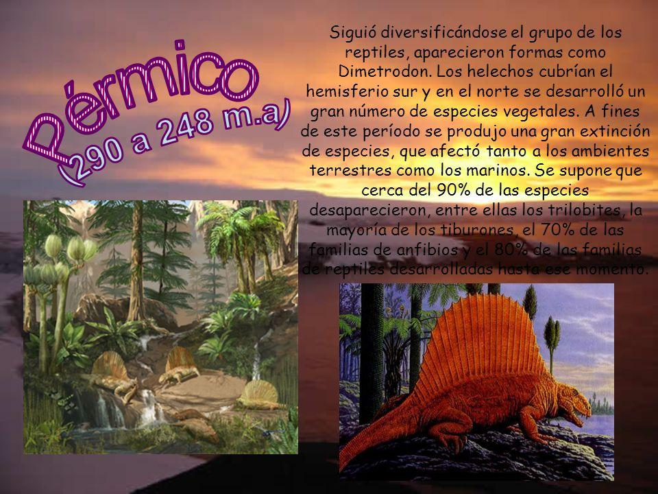 Siguió diversificándose el grupo de los reptiles, aparecieron formas como Dimetrodon. Los helechos cubrían el hemisferio sur y en el norte se desarrolló un gran número de especies vegetales. A fines de este período se produjo una gran extinción de especies, que afectó tanto a los ambientes terrestres como los marinos. Se supone que cerca del 90% de las especies desaparecieron, entre ellas los trilobites, la mayoría de los tiburones, el 70% de las familias de anfibios y el 80% de las familias de reptiles desarrolladas hasta ese momento.