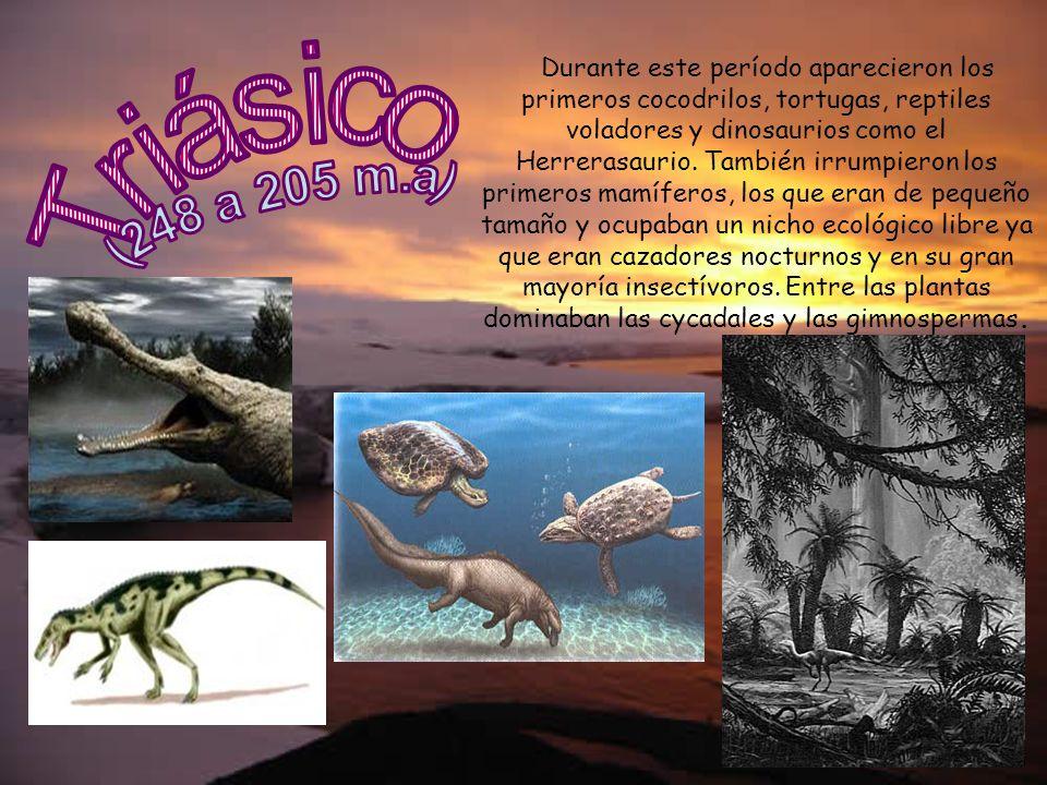 Durante este período aparecieron los primeros cocodrilos, tortugas, reptiles voladores y dinosaurios como el Herrerasaurio. También irrumpieron los primeros mamíferos, los que eran de pequeño tamaño y ocupaban un nicho ecológico libre ya que eran cazadores nocturnos y en su gran mayoría insectívoros. Entre las plantas dominaban las cycadales y las gimnospermas.