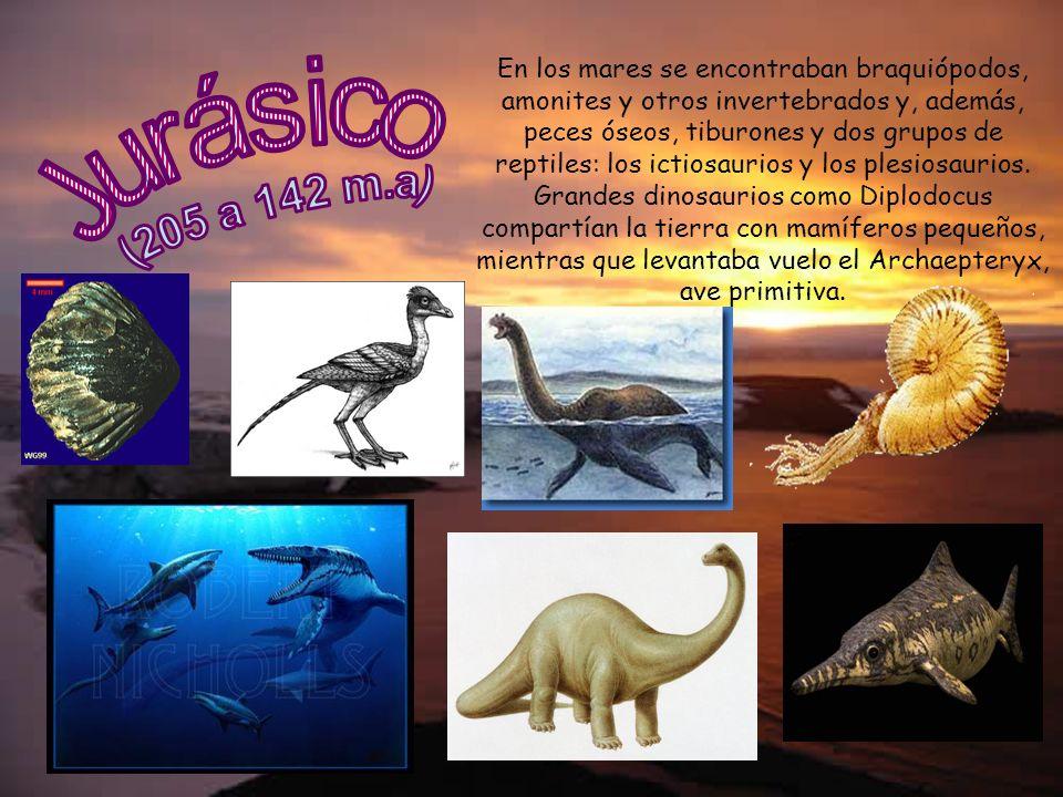 En los mares se encontraban braquiópodos, amonites y otros invertebrados y, además, peces óseos, tiburones y dos grupos de reptiles: los ictiosaurios y los plesiosaurios. Grandes dinosaurios como Diplodocus compartían la tierra con mamíferos pequeños, mientras que levantaba vuelo el Archaepteryx, ave primitiva.
