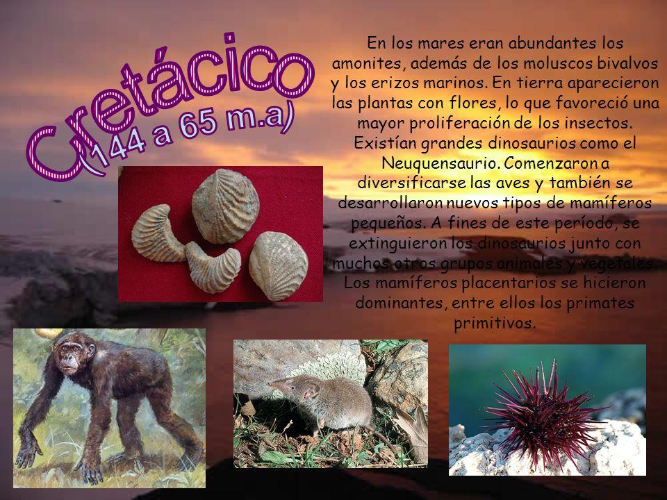 En los mares eran abundantes los amonites, además de los moluscos bivalvos y los erizos marinos. En tierra aparecieron las plantas con flores, lo que favoreció una mayor proliferación de los insectos. Existían grandes dinosaurios como el Neuquensaurio. Comenzaron a diversificarse las aves y también se desarrollaron nuevos tipos de mamíferos pequeños. A fines de este período, se extinguieron los dinosaurios junto con muchos otros grupos animales y vegetales. Los mamíferos placentarios se hicieron dominantes, entre ellos los primates primitivos.