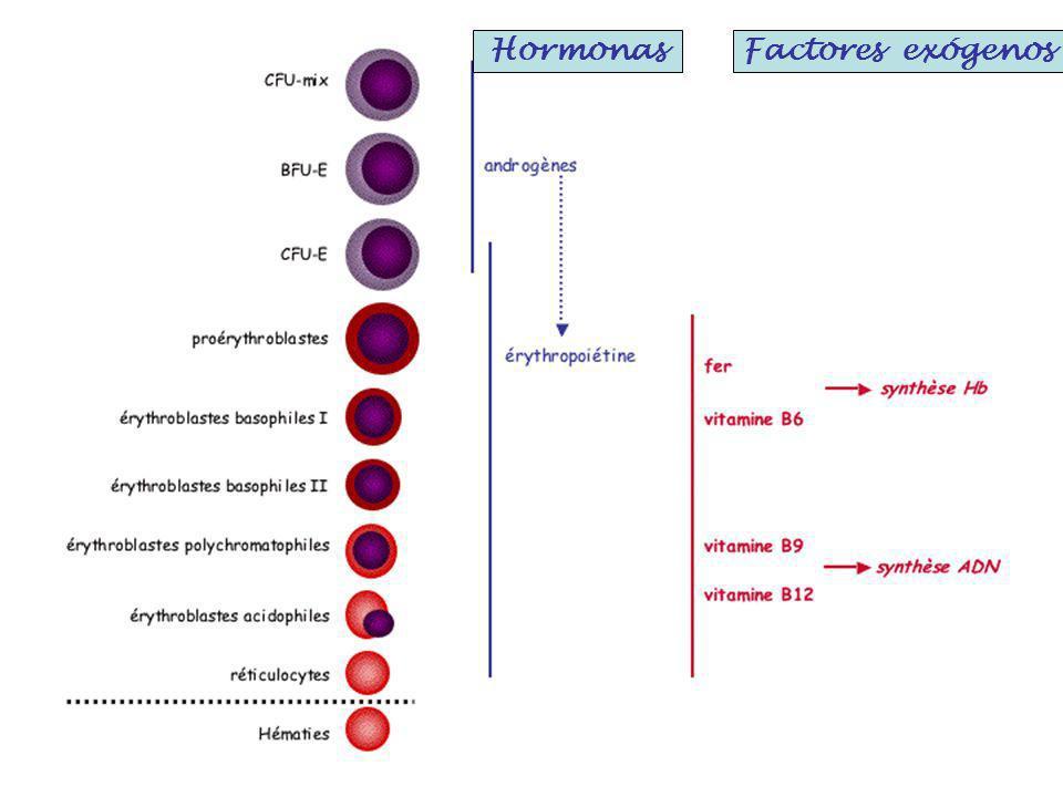 Hormonas Factores exógenos