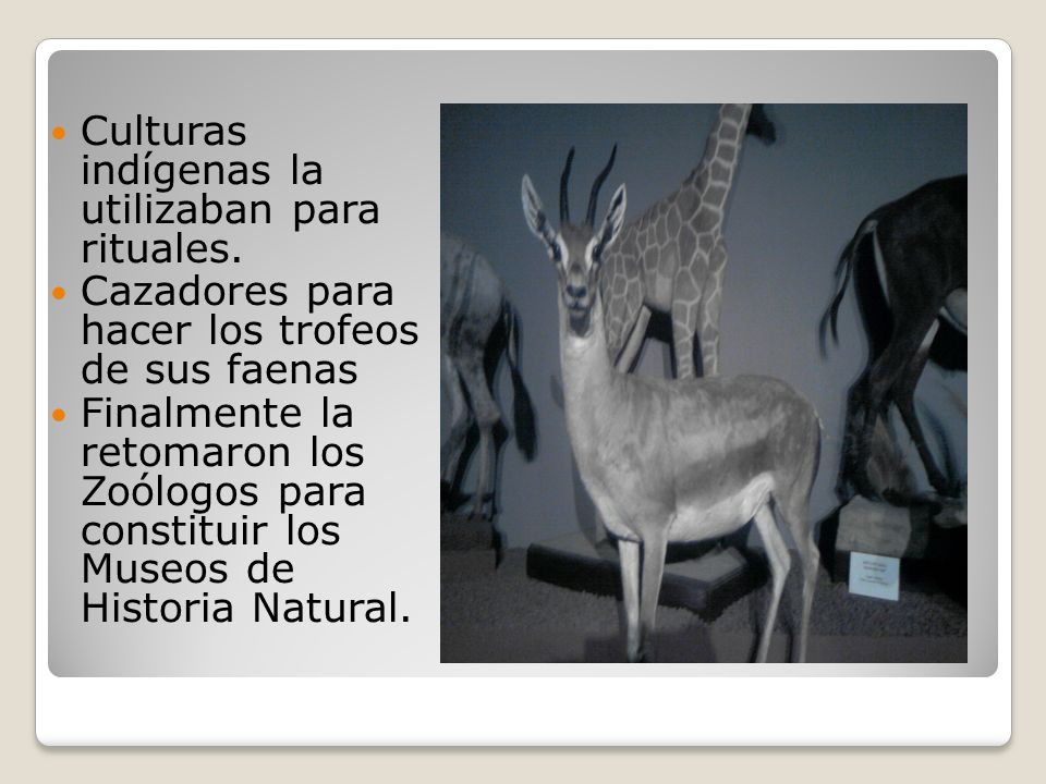 Culturas indígenas la utilizaban para rituales.