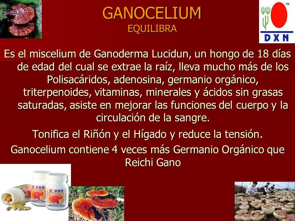 GANOCELIUM EQUILIBRA