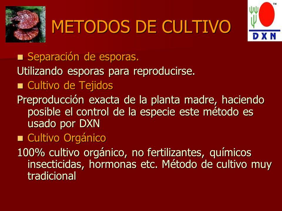 METODOS DE CULTIVO Separación de esporas.