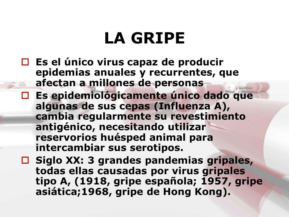 LA GRIPEEs el único virus capaz de producir epidemias anuales y recurrentes, que afectan a millones de personas.