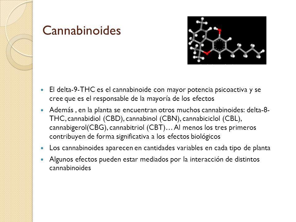 CannabinoidesEl delta-9-THC es el cannabinoide con mayor potencia psicoactiva y se cree que es el responsable de la mayoría de los efectos.