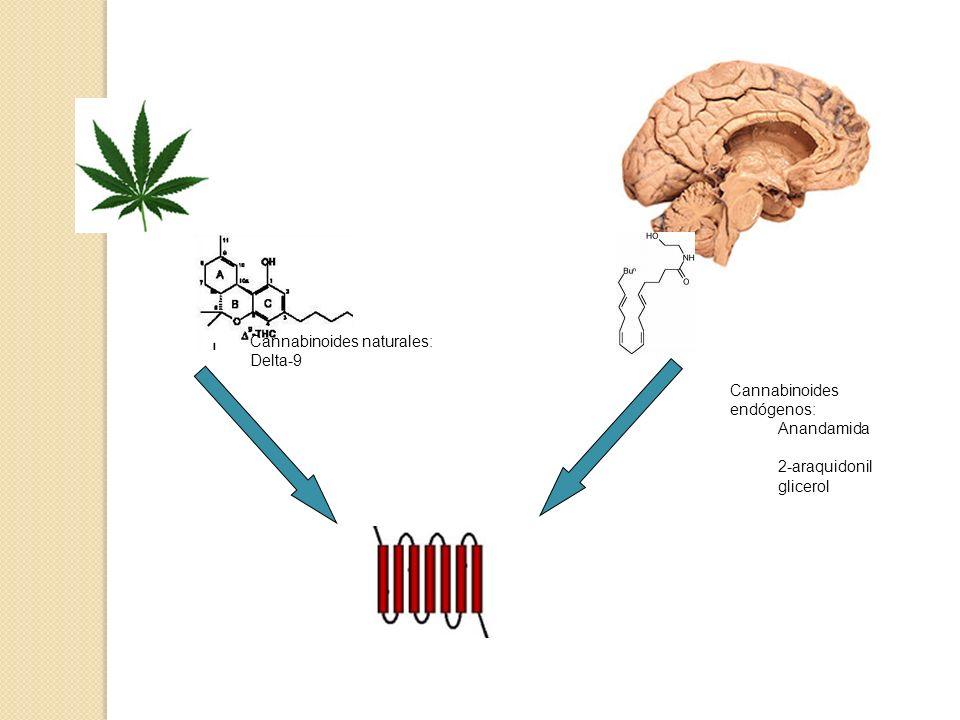 Cannabinoides naturales: