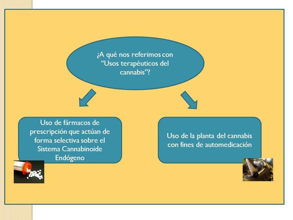 ¿A qué nos referimos con Usos terapéuticos del cannabis