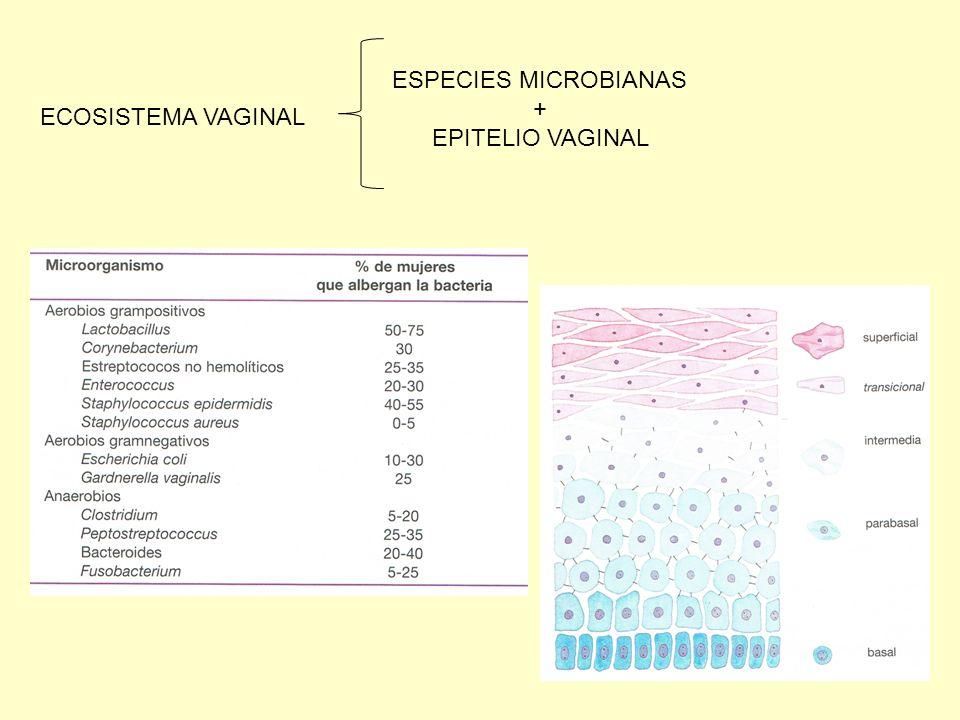 ESPECIES MICROBIANAS + EPITELIO VAGINAL ECOSISTEMA VAGINAL