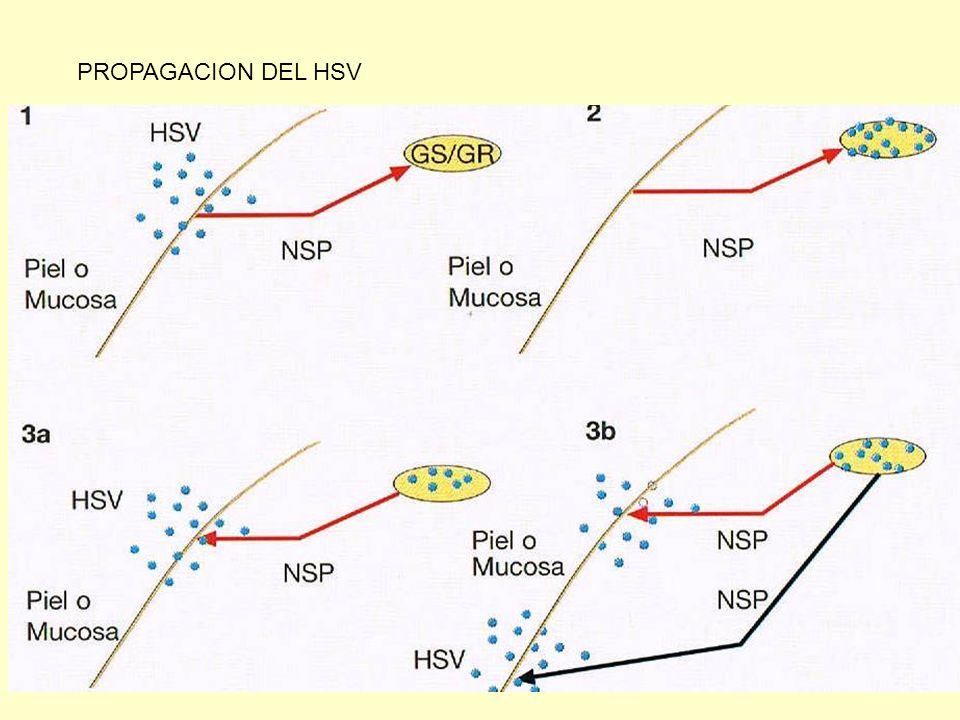 PROPAGACION DEL HSV