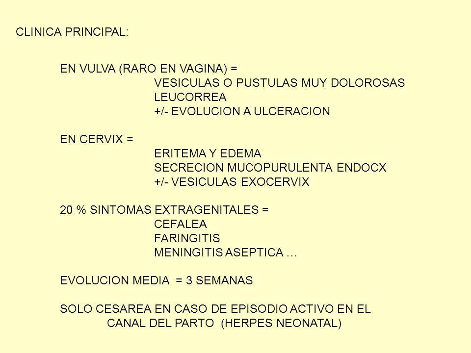 CLINICA PRINCIPAL: EN VULVA (RARO EN VAGINA) = VESICULAS O PUSTULAS MUY DOLOROSAS. LEUCORREA. +/- EVOLUCION A ULCERACION.