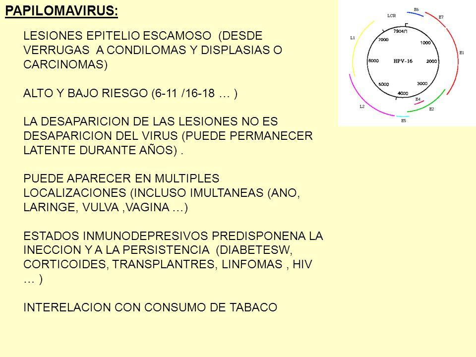 PAPILOMAVIRUS: LESIONES EPITELIO ESCAMOSO (DESDE VERRUGAS A CONDILOMAS Y DISPLASIAS O CARCINOMAS)