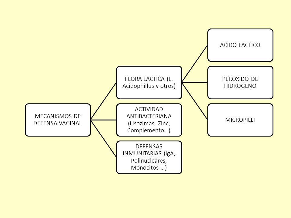 MECANISMOS DE DEFENSA VAGINAL FLORA LACTICA (L. Acidophillus y otros)