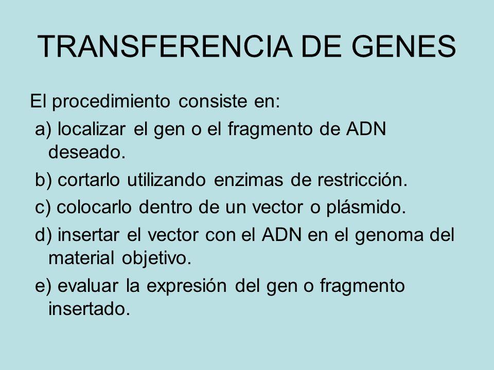 TRANSFERENCIA DE GENES