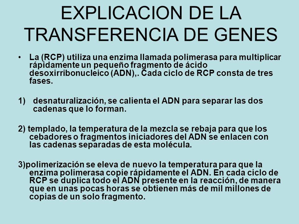 EXPLICACION DE LA TRANSFERENCIA DE GENES