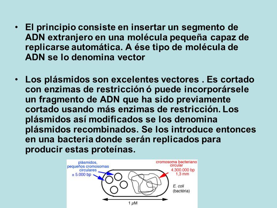 El principio consiste en insertar un segmento de ADN extranjero en una molécula pequeña capaz de replicarse automática. A ése tipo de molécula de ADN se lo denomina vector