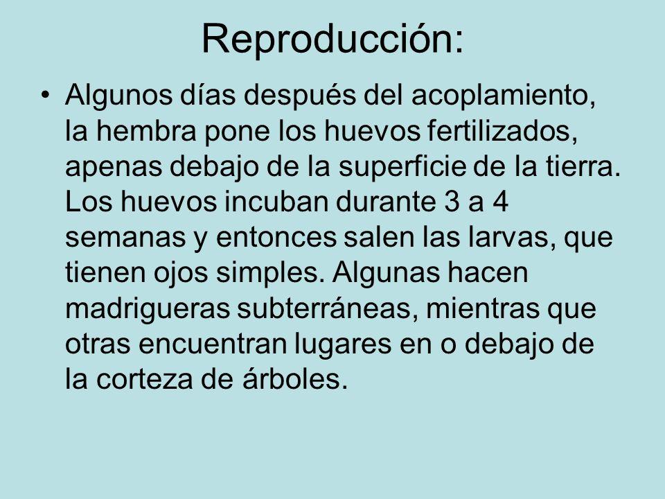 Reproducción: