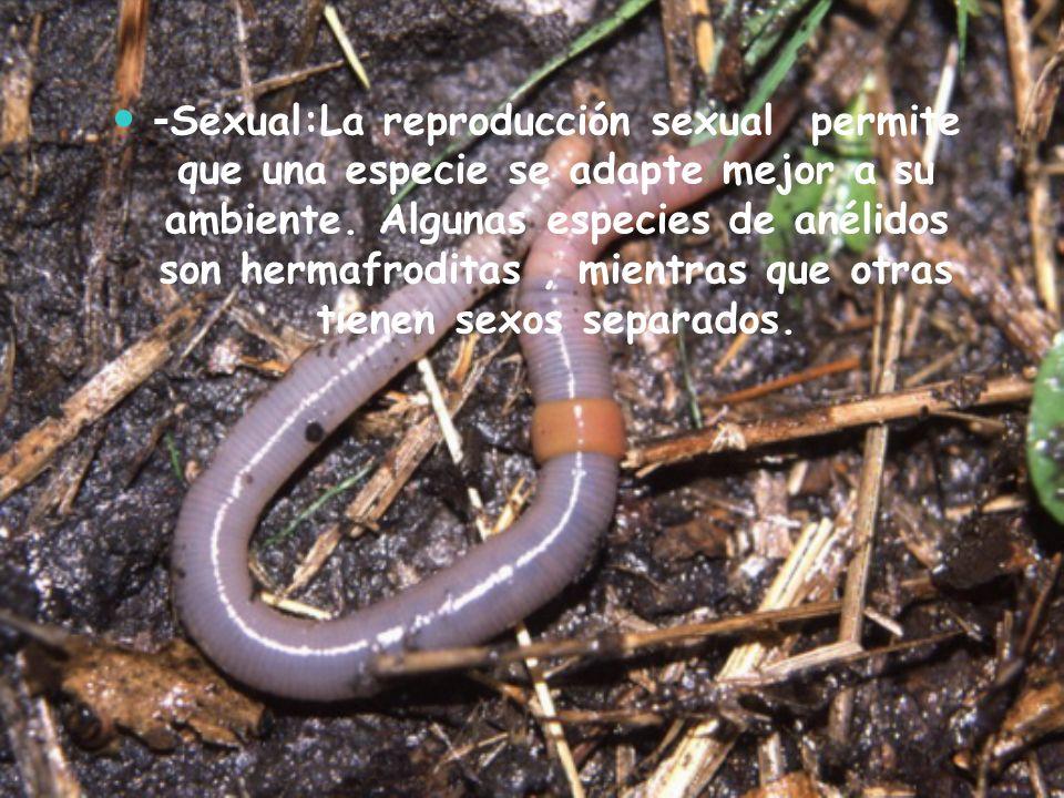 -Sexual:La reproducción sexual permite que una especie se adapte mejor a su ambiente.