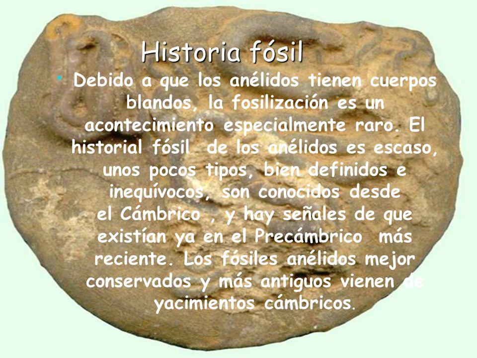 Historia fósil