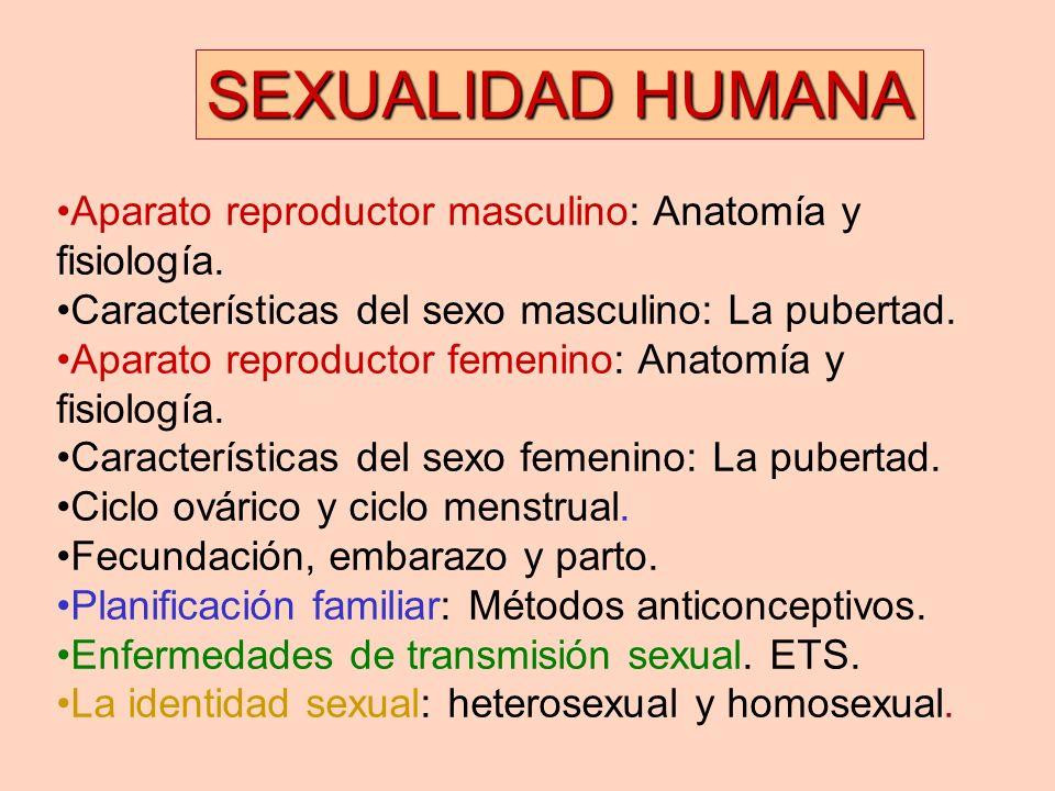 Famoso Anatomía Y Fisiología Del Embarazo Adorno - Imágenes de ...