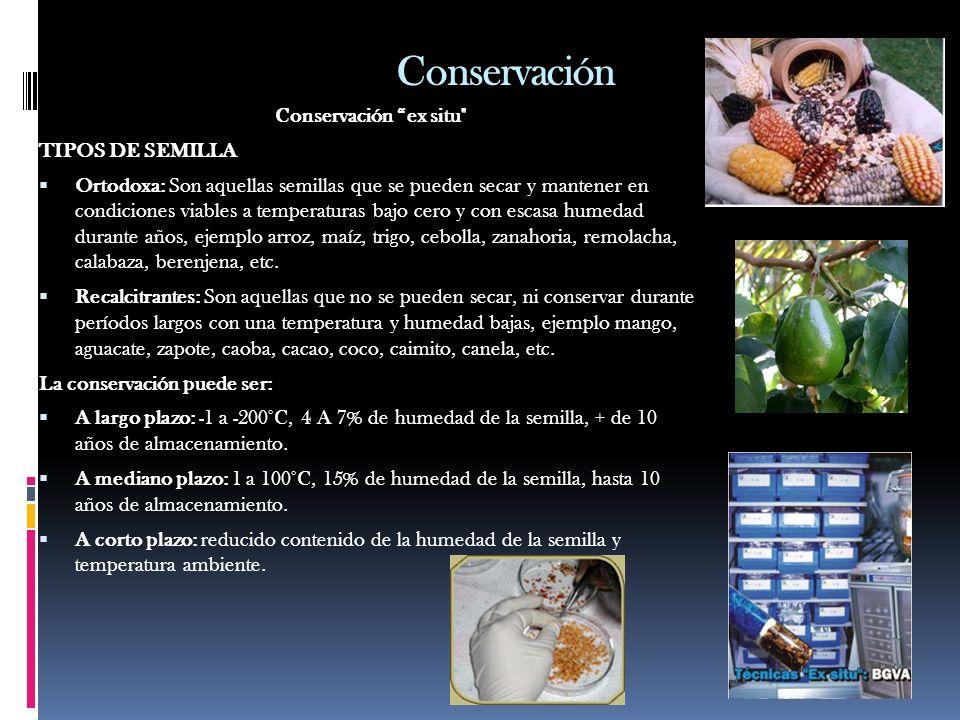 Conservación Conservación ex situ TIPOS DE SEMILLA