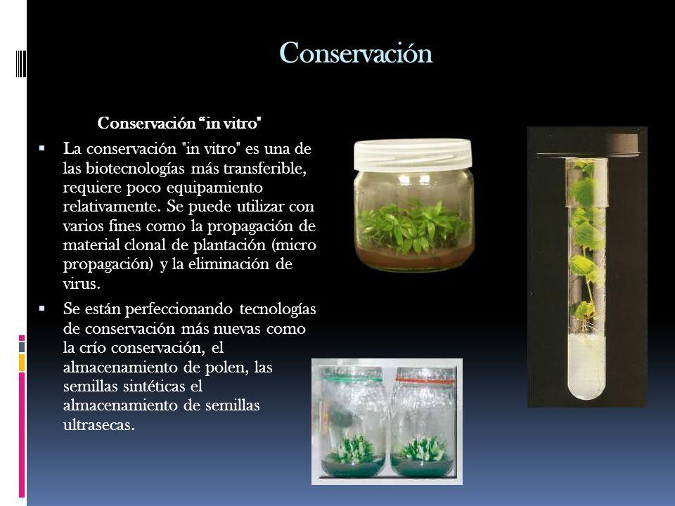 Conservación in vitro