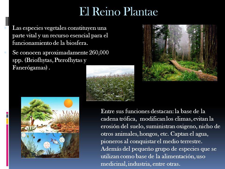 El Reino PlantaeLas especies vegetales constituyen una parte vital y un recurso esencial para el funcionamiento de la biosfera.