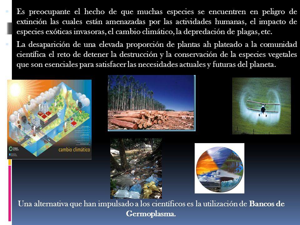 Es preocupante el hecho de que muchas especies se encuentren en peligro de extinción las cuales están amenazadas por las actividades humanas, el impacto de especies exóticas invasoras, el cambio climático, la depredación de plagas, etc.
