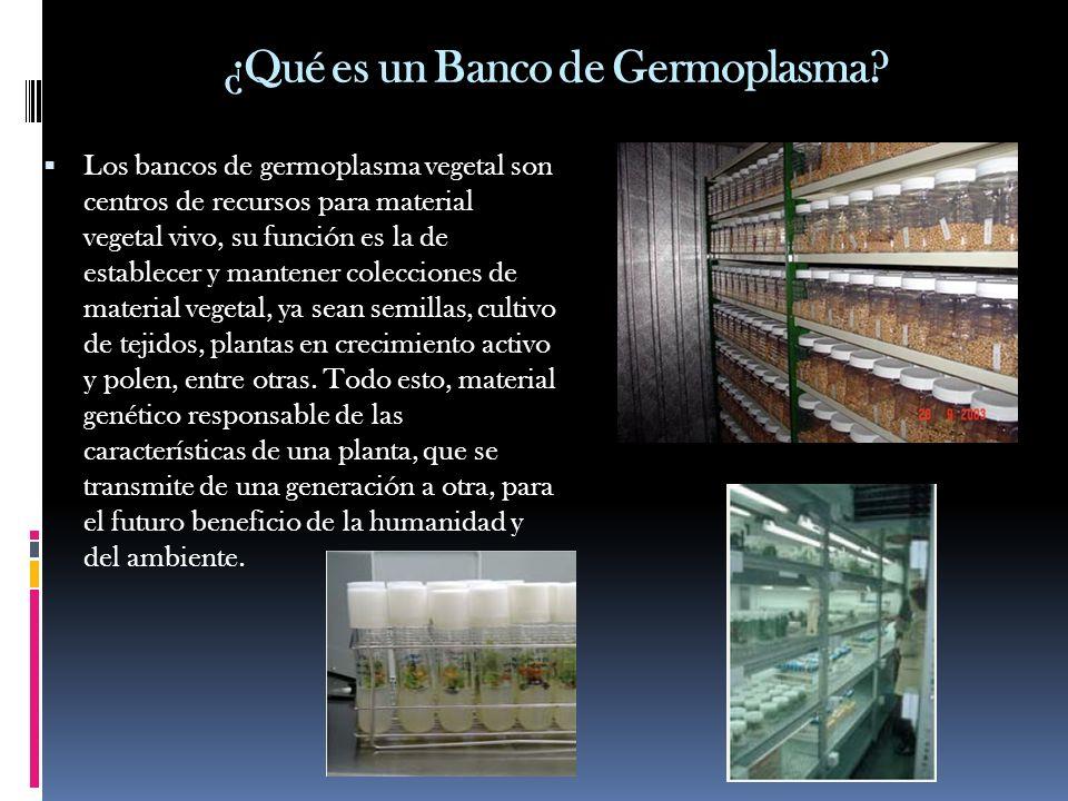 ¿Qué es un Banco de Germoplasma