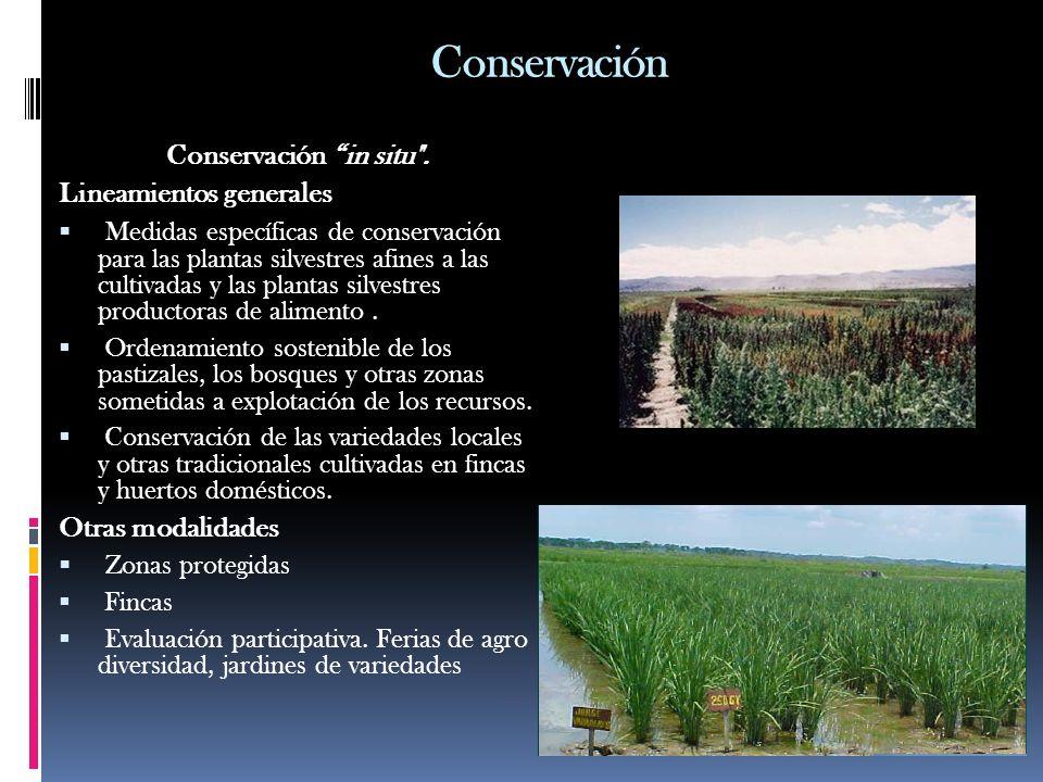 Conservación Conservación in situ . Lineamientos generales
