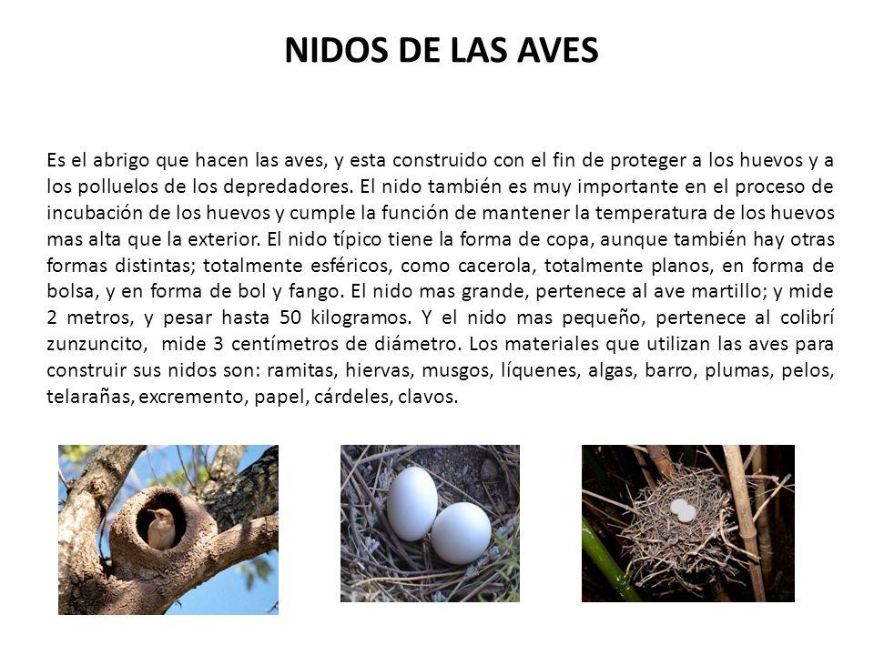 NIDOS DE LAS AVES