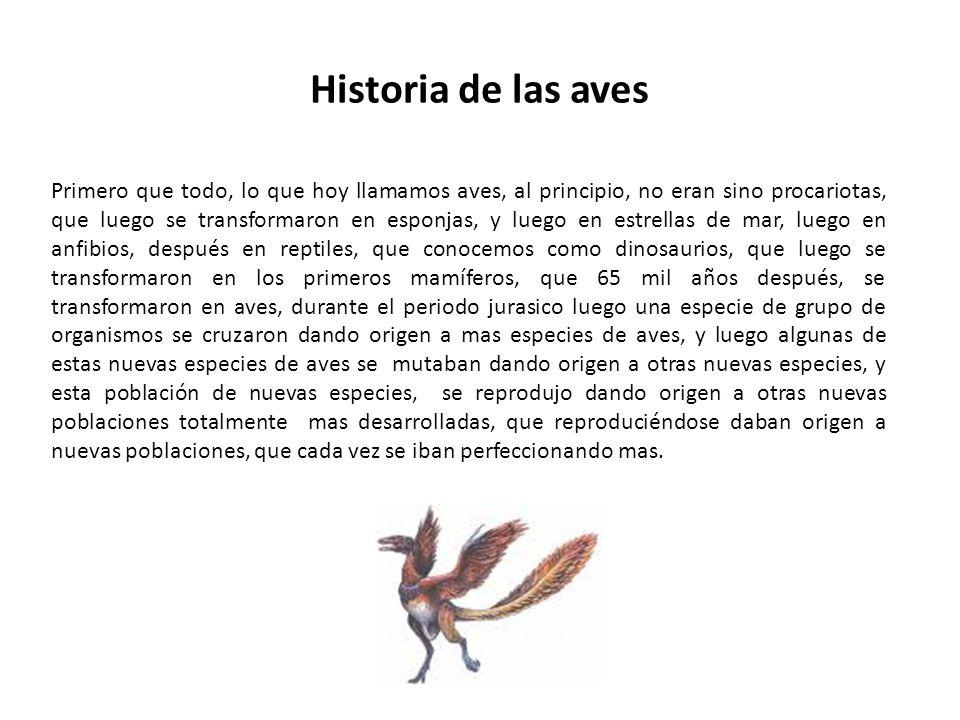 Historia de las aves