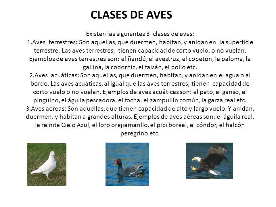 CLASES DE AVES