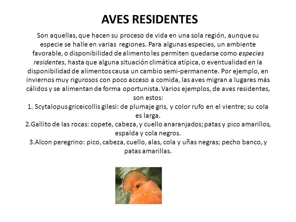 AVES RESIDENTES