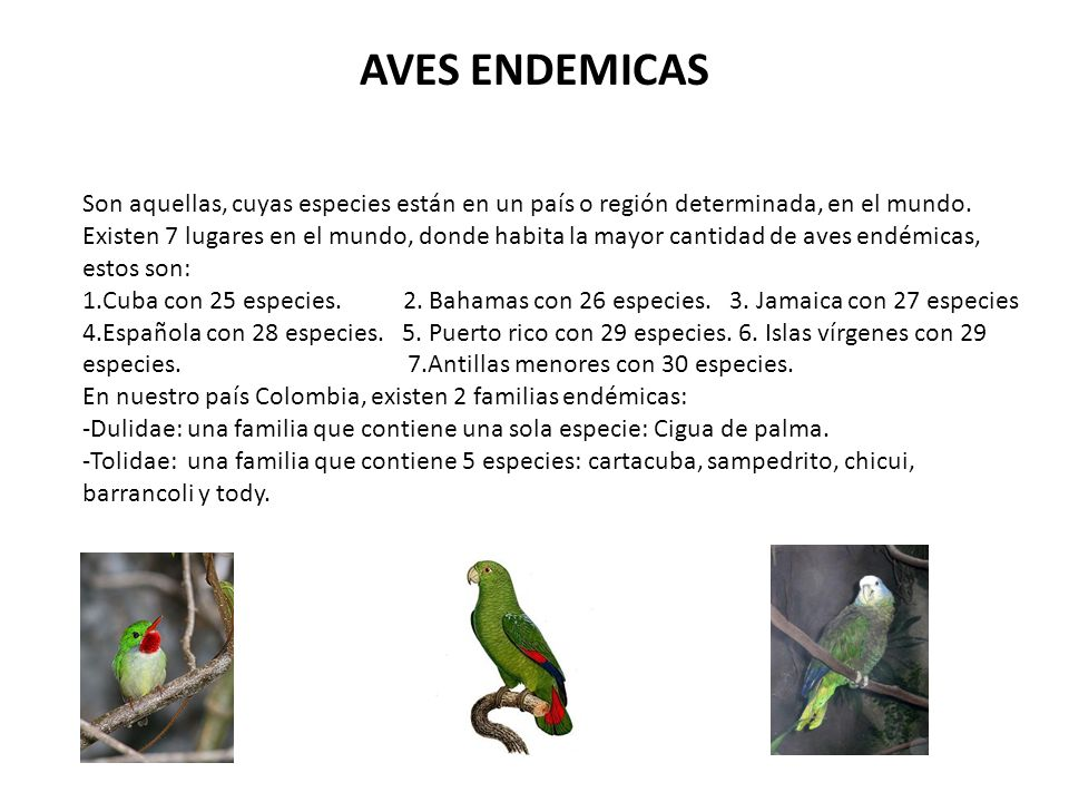 AVES ENDEMICAS